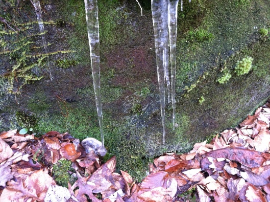 pisgah icicles